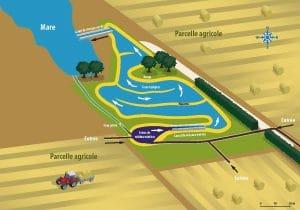 schéma de fonctionnement de la zone tampon humide artificielle