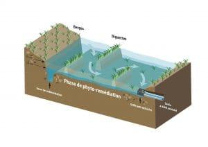 schéma d'une zone tampon humide artificielle, vue en coupe