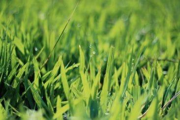 Étude sur l'évolution des surfaces en herbe de 1990 à 2013