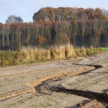 haie herbacée stoppant une ravine